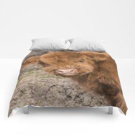 Baby Scottish Highland Coo Comforters