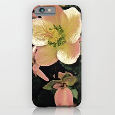 Helleborus iPhone 6s Slim Case