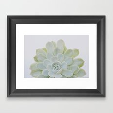 succulent 04 Framed Art Print