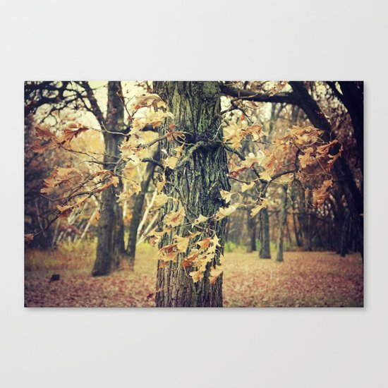 Wilted Beauty Canvas Print