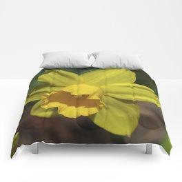 Beautiful Spring Daffodil Comforters