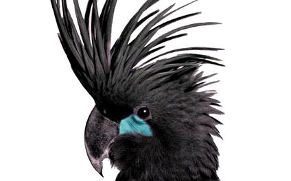 Art Print - Parrot - kamina22