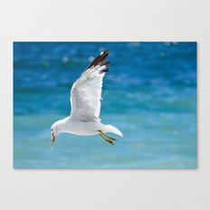 Gull with Fish Canvas Print
