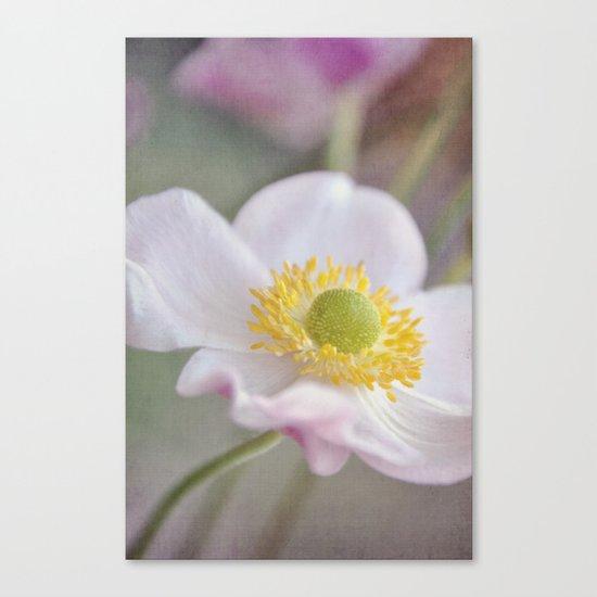 Anemone love I Canvas Print