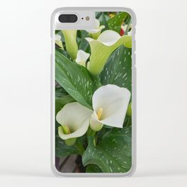 white pink colored calla lily in the garden Clear iPhone Case