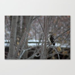 Hawk's Got an Eye on You Photo Canvas Print