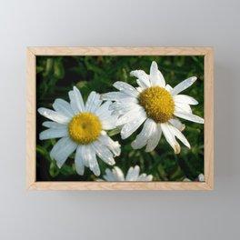 Rain Kissed Daisy Duo Framed Mini Art Print