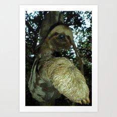The sloth Art Print