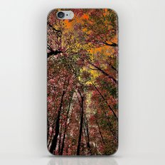 Colored forest iPhone & iPod Skin
