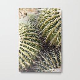 Where the Barrel Cactus Meet Metal Print