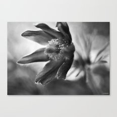 Floral in Black and White Canvas Print