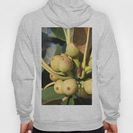 Fig Tree Hoody