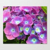 hydrangea Canvas Prints featuring Hydrangea by Trevor Jolley