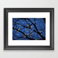 Leaves Of Spring Framed Art Print