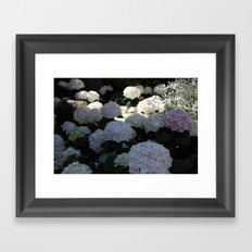 White Hydrangea Flowery Meadow Framed Art Print