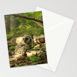 Baby barred owlet on forest floor Stationery Cards