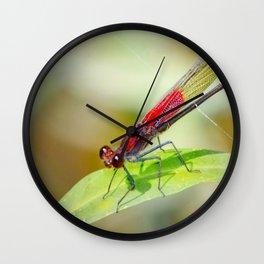 Red Damselfly Dragonfly Wall Clock