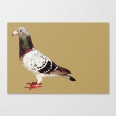 Pigeon Canvas Print