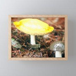 Fungi Forage #8 Framed Mini Art Print