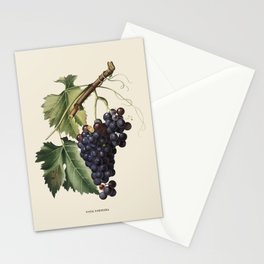 Black Grape Antique Botanical Illustration Stationery Cards