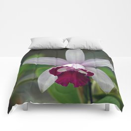 Cattleya Orchid (The Corsage Orchid) Comforters