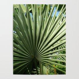 Fan Palm Poster