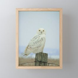 Snowy Owl Framed Mini Art Print
