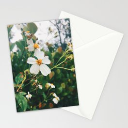 Whimsical Meadow Stationery Cards
