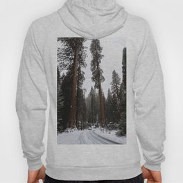 Entering the Giant Forest Hoody