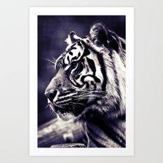 Sumartran Tiger  Art Print