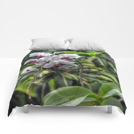 Tropical Orchids Comforters