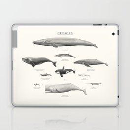 Cetacea Laptop & iPad Skin