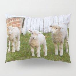 3 Little Lambs Pillow Sham