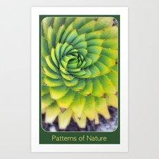 Patterns of Nature - succulent I Art Print
