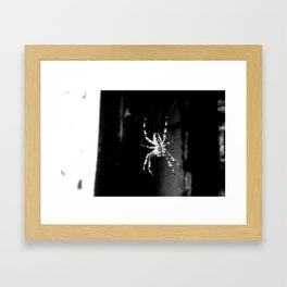 Spider in Amsterdam Framed Art Print