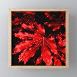 Festive Fatsia - Christmas Red Framed Mini Art Print