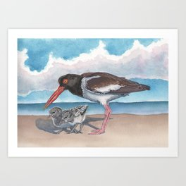 American Oystercatcher and chicks Art Print