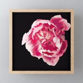 Pink Tulip Flower On A Black Background #decor #society6 #homedecor Framed Mini Art Print