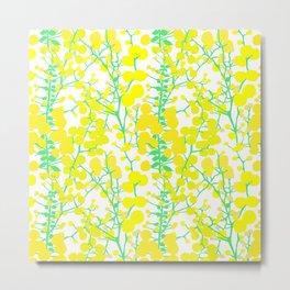 Australian Golden Wattle Flowers in White Metal Print