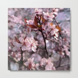 Cherry Plum Tree Pink Metal Print