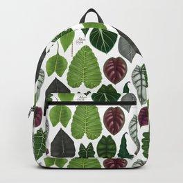 Alocasia leaf species illustration & pattern Backpack