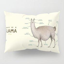 Anatomy of a Llama Pillow Sham