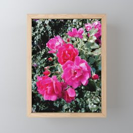 Pink roses Framed Mini Art Print