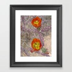 Pencil cholla in flower Framed Art Print