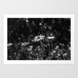 Summer Daisies Black and White Art Print