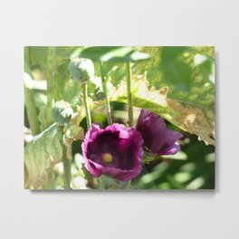 Hidden Beauties Metal Print