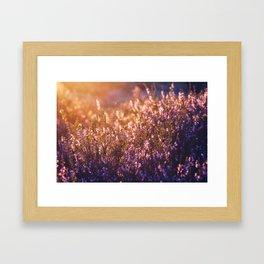 golden heather Framed Art Print