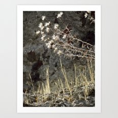 on herculaneum walls Art Print
