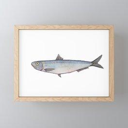 Sardine: Fish of Portgual Framed Mini Art Print