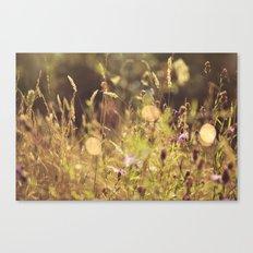 Summer Fields | 01 Canvas Print